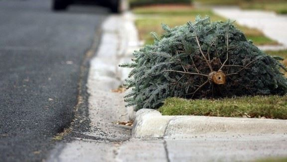 Christmas-tree-on-curb